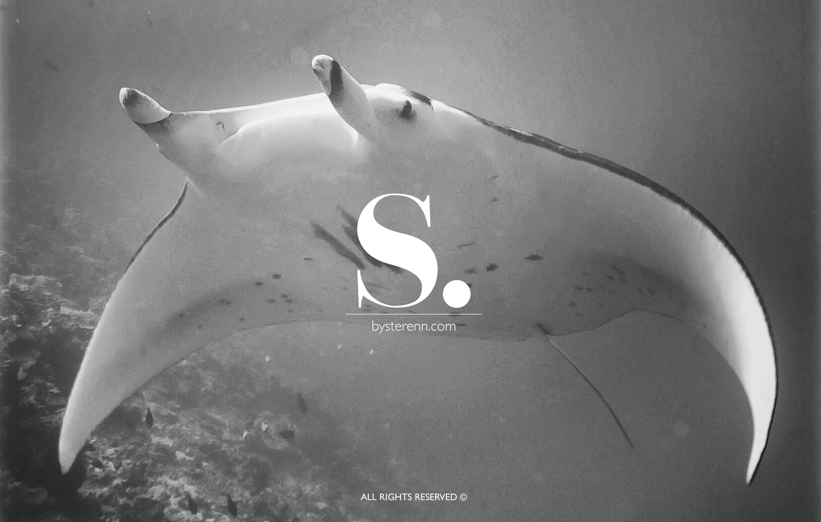 Home_manta_ray_2019_web_ok.jpg